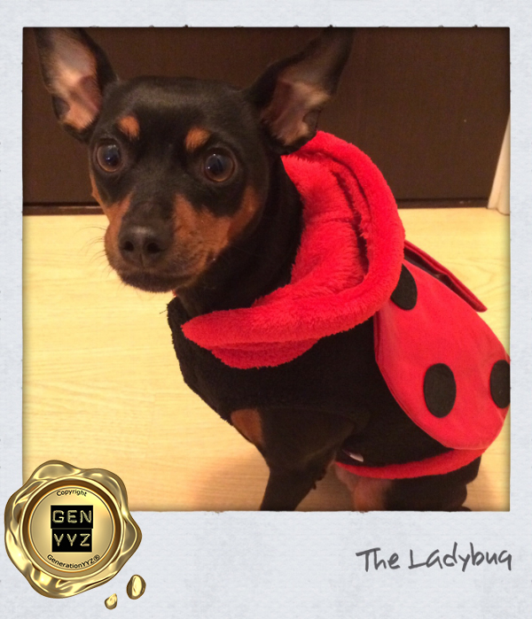 """Pampered Pet: Don't Be a """"Hallo-weenie"""", Dress Up Like CoCo-beanie - Image 4"""