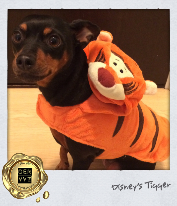 """Pampered Pet: Don't Be a """"Hallo-weenie"""", Dress Up Like CoCo-beanie - Image 5"""