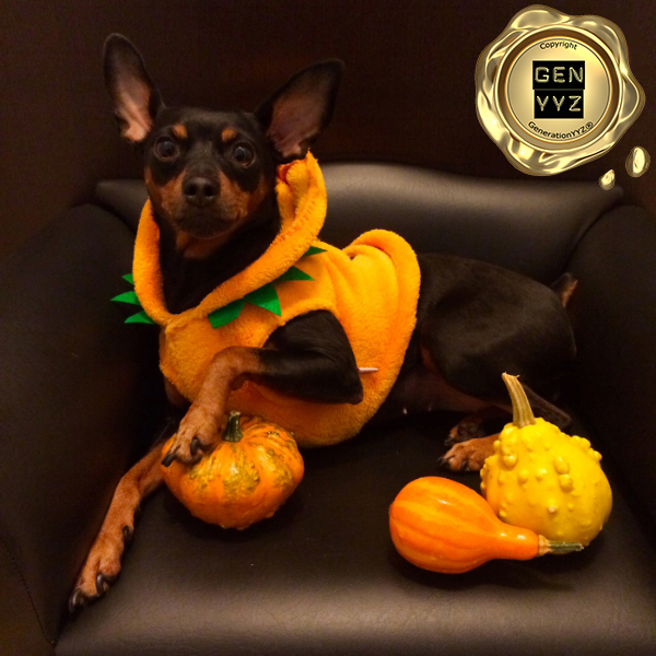 """Pampered Pet: Don't Be a """"Hallo-weenie"""", Dress Up Like CoCo-beanie - Image 6"""