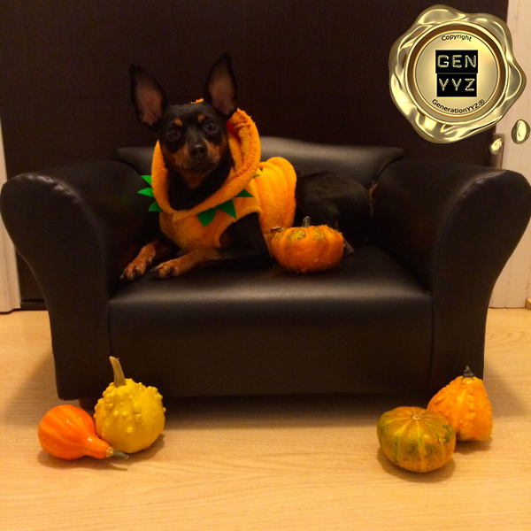 """Pampered Pet: Don't Be a """"Hallo-weenie"""", Dress Up Like CoCo-beanie - Image 7"""