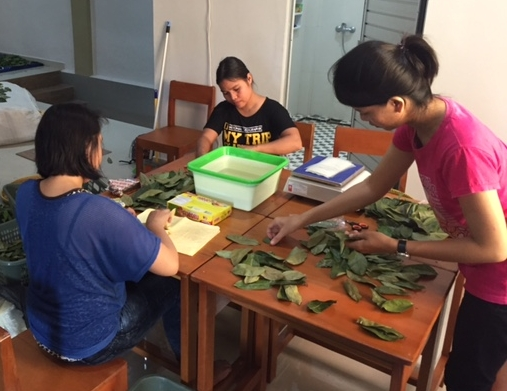 Sorting leaves.jpg