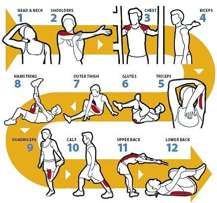 Basic Stretches.jpg