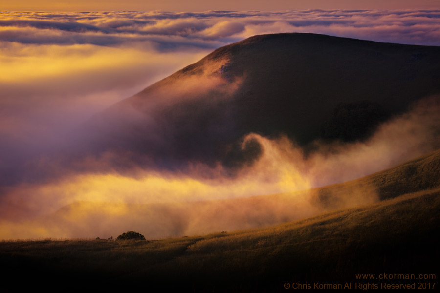 Fog Flows on the Slopes of Mount Tamalpais