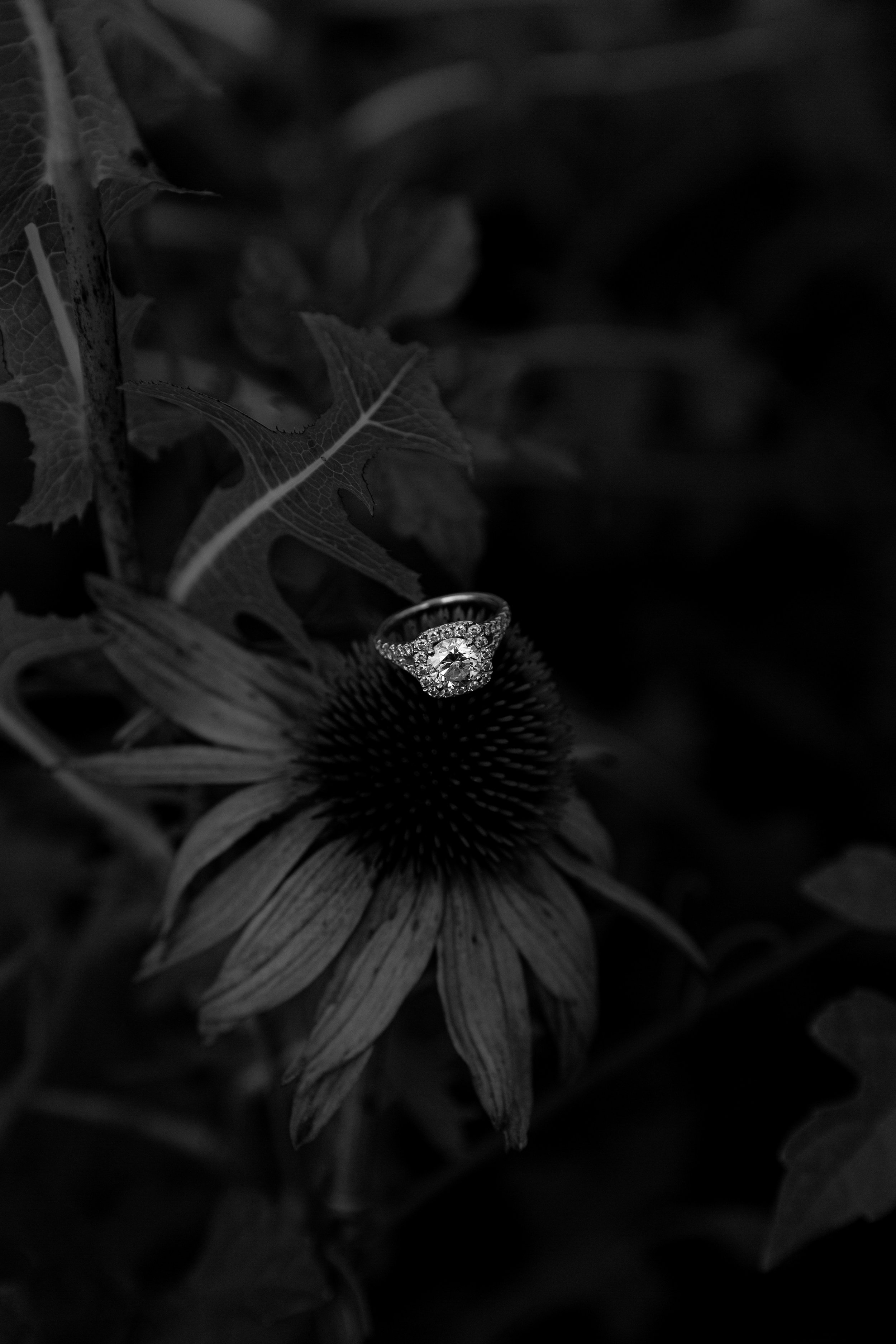 Claire_Chase_Engagement-4058.jpg