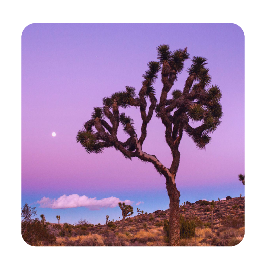 Take a volunteer adventure.    Spend an afternoon with The Joshua Tree National Park Association helping preserve this spectacular natural area where the Mohave and Colorado deserts meet. (Don't worry, it's cool in February.)