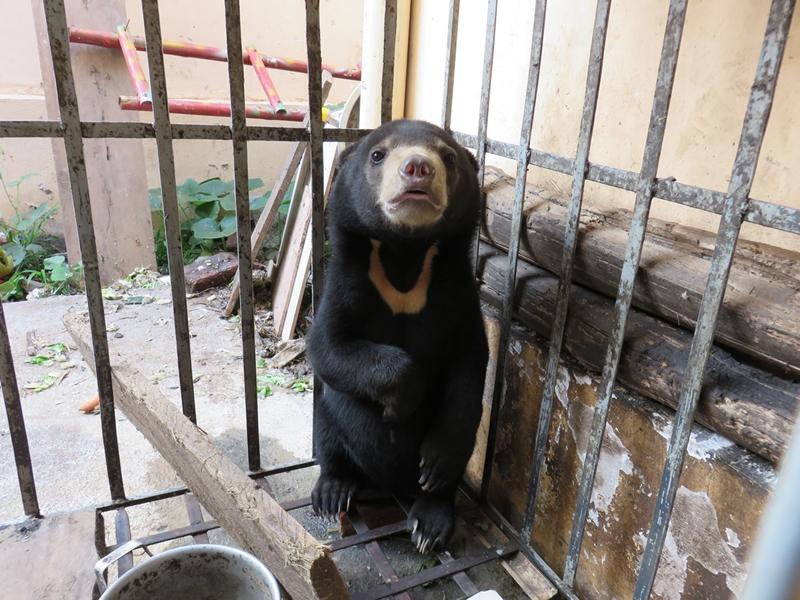 (Photo courtesy of Animals Asia)