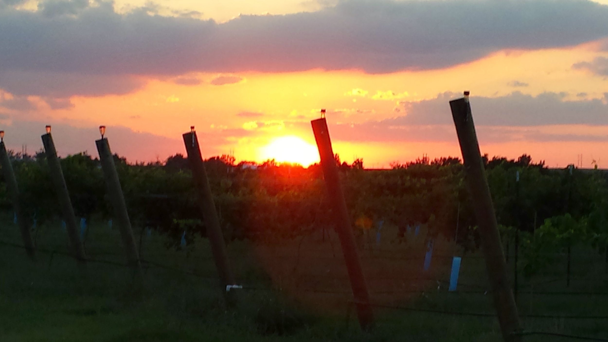 Enjoy a walk through the vineyards with your camera and capture a beautiful sunset