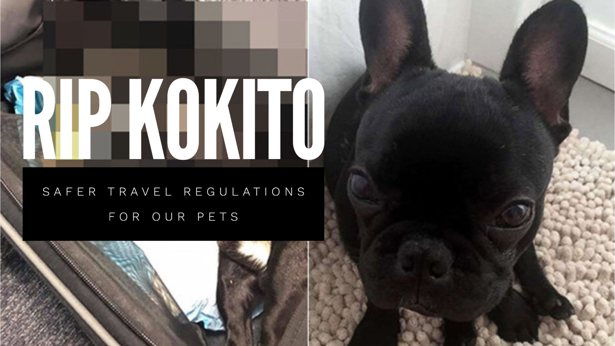 Rip Kokito Safer Travel Regulations For Our Pets Attajaan If you are unsure, please consult the website of the uk. rip kokito safer travel regulations