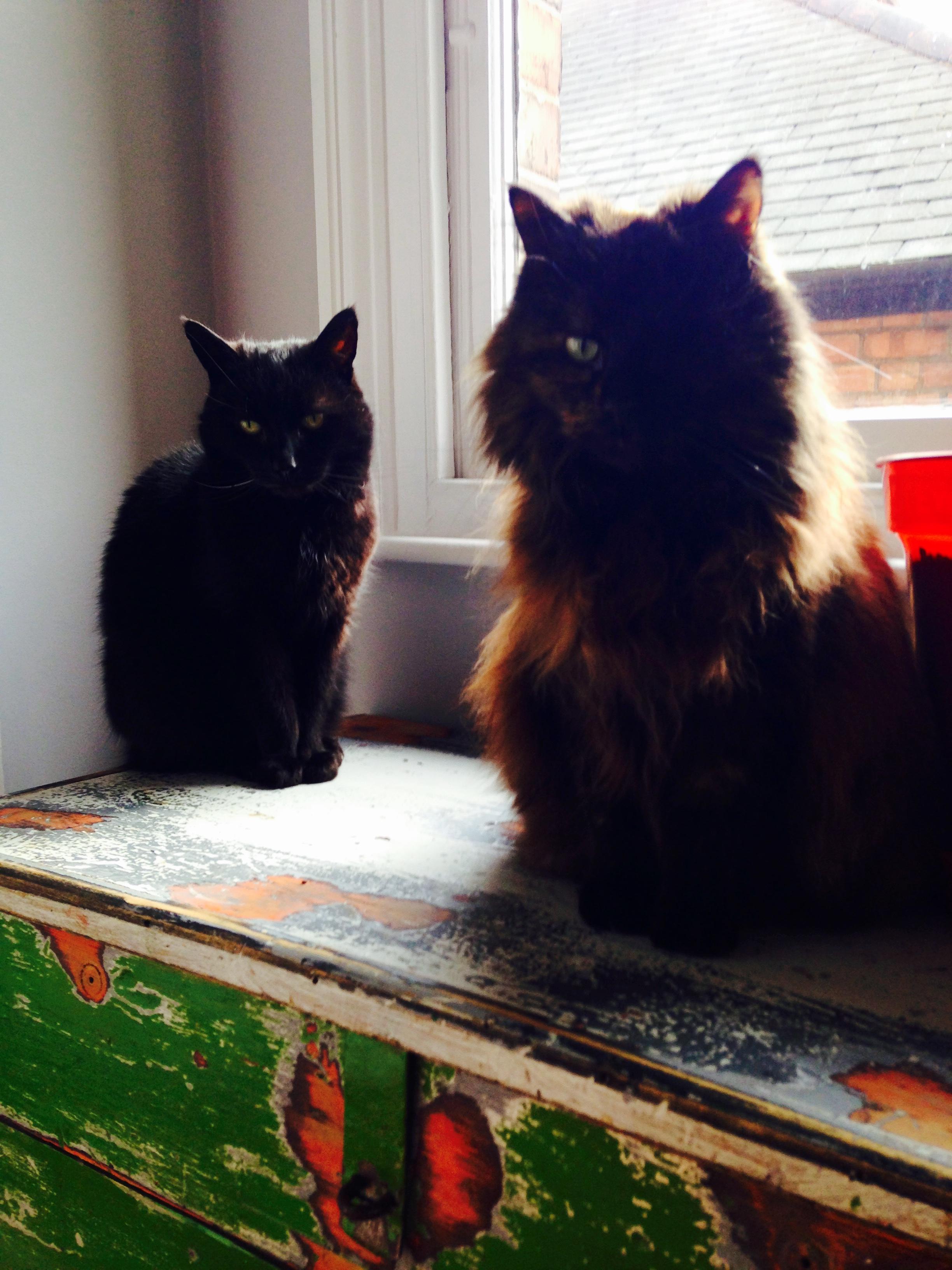 Oscar & Rosie