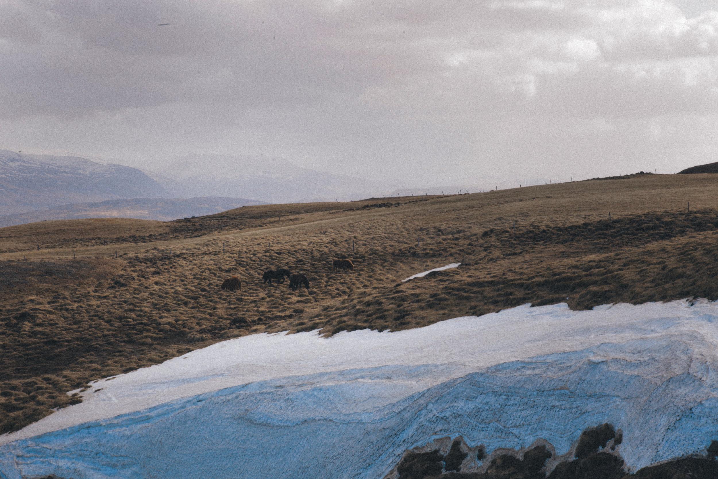 iceland  (19 of 91).jpg
