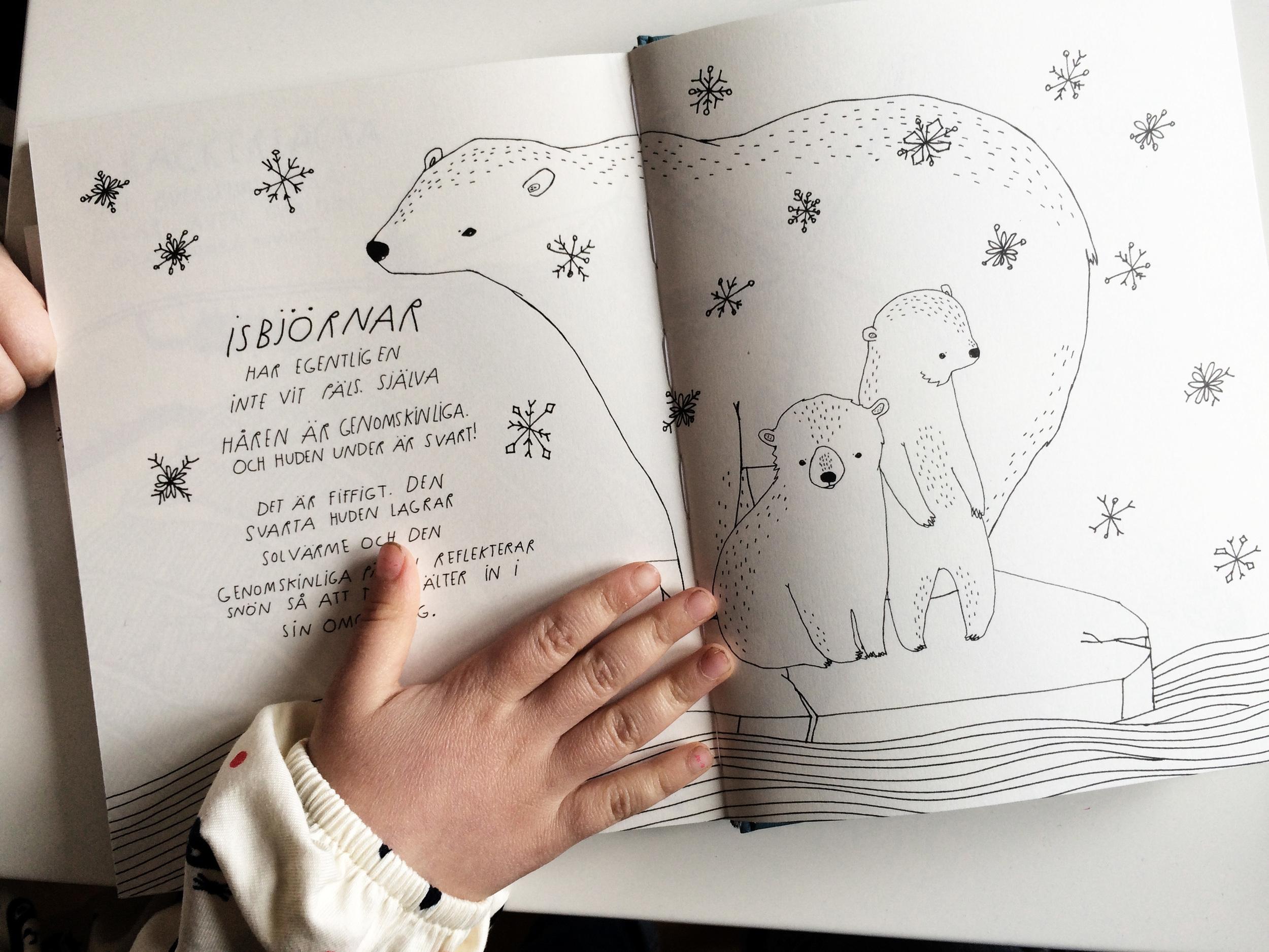 fantastiska fakta om djur, maja säfström, majasbok, isbjörnar, naturochkultur, bilderbok, faktabok