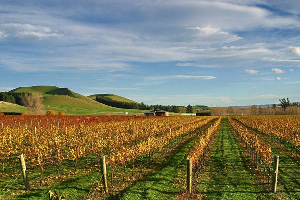 Canterbury - Muddy Waters (Photo Credit- New Zealand Wine Growers)