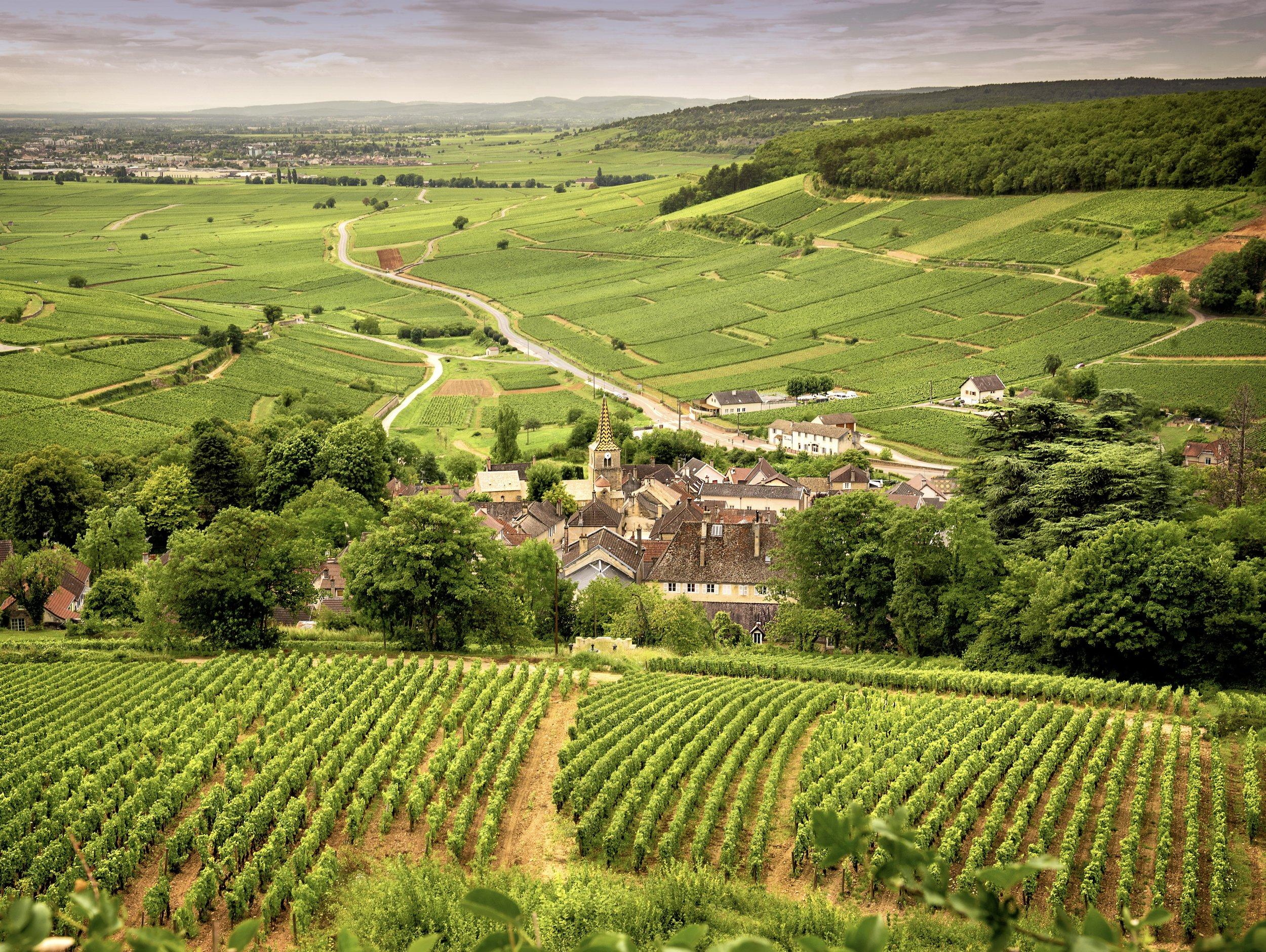 Vineyards (Photo credit: Massimo Santi, Shutterstock)