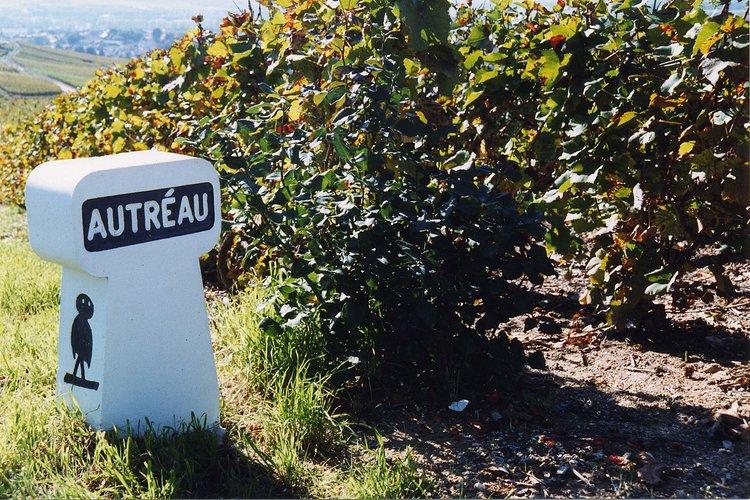 Autréau vineyards (Photo credit: Autréau)