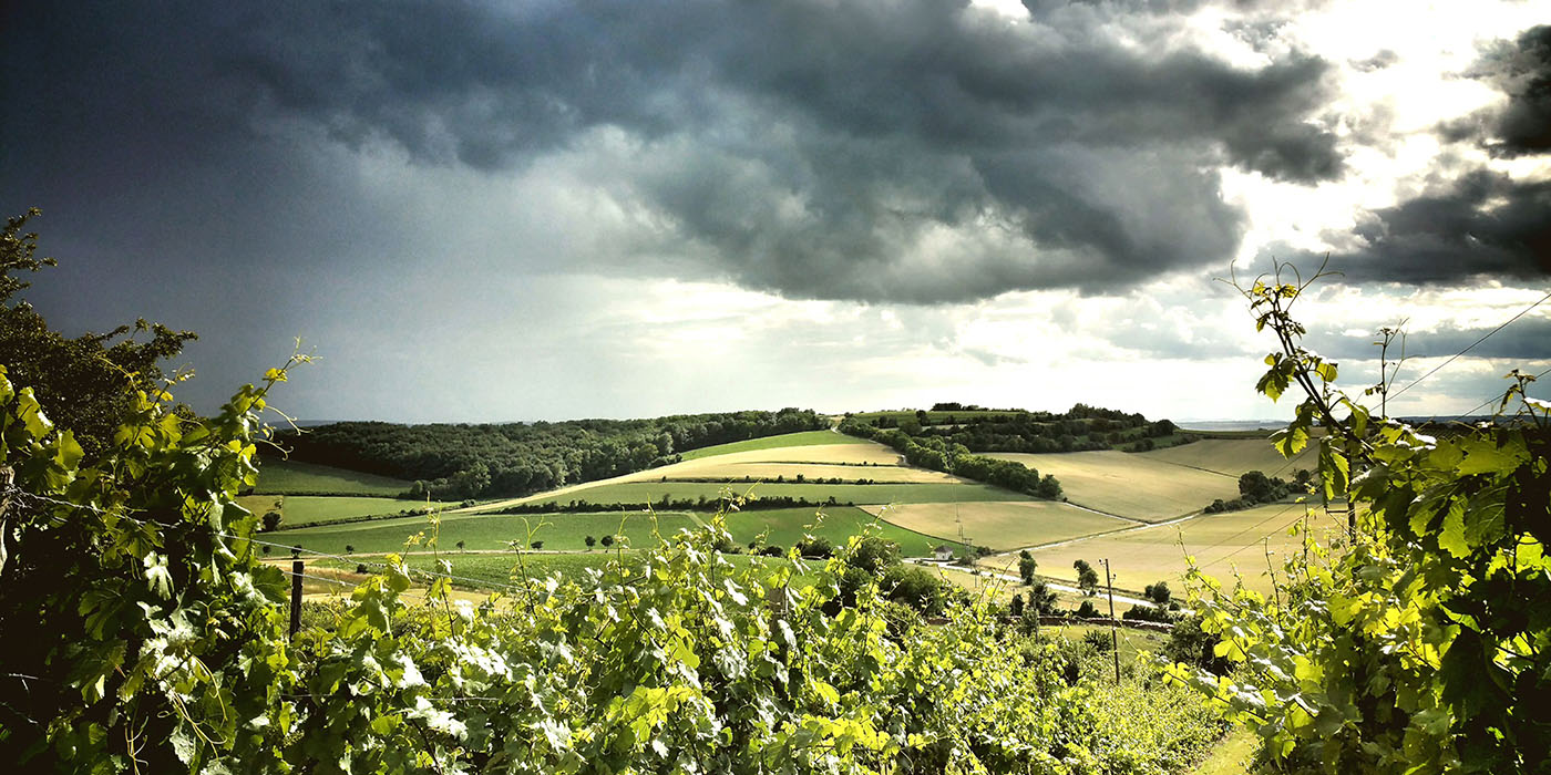 Vineyards where Ingrid works (Photo credit: Groiss)