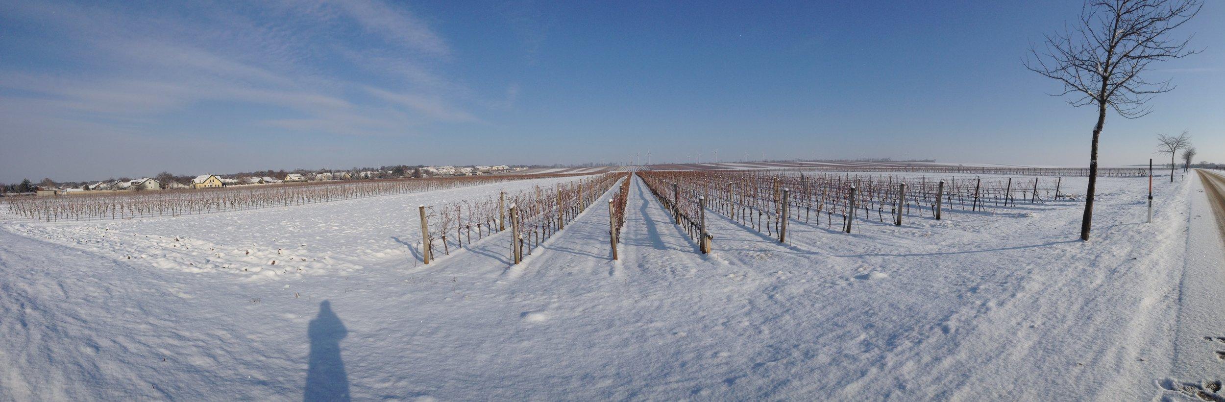 Winter Wenigarten (Photo credit: Artisan Wines)