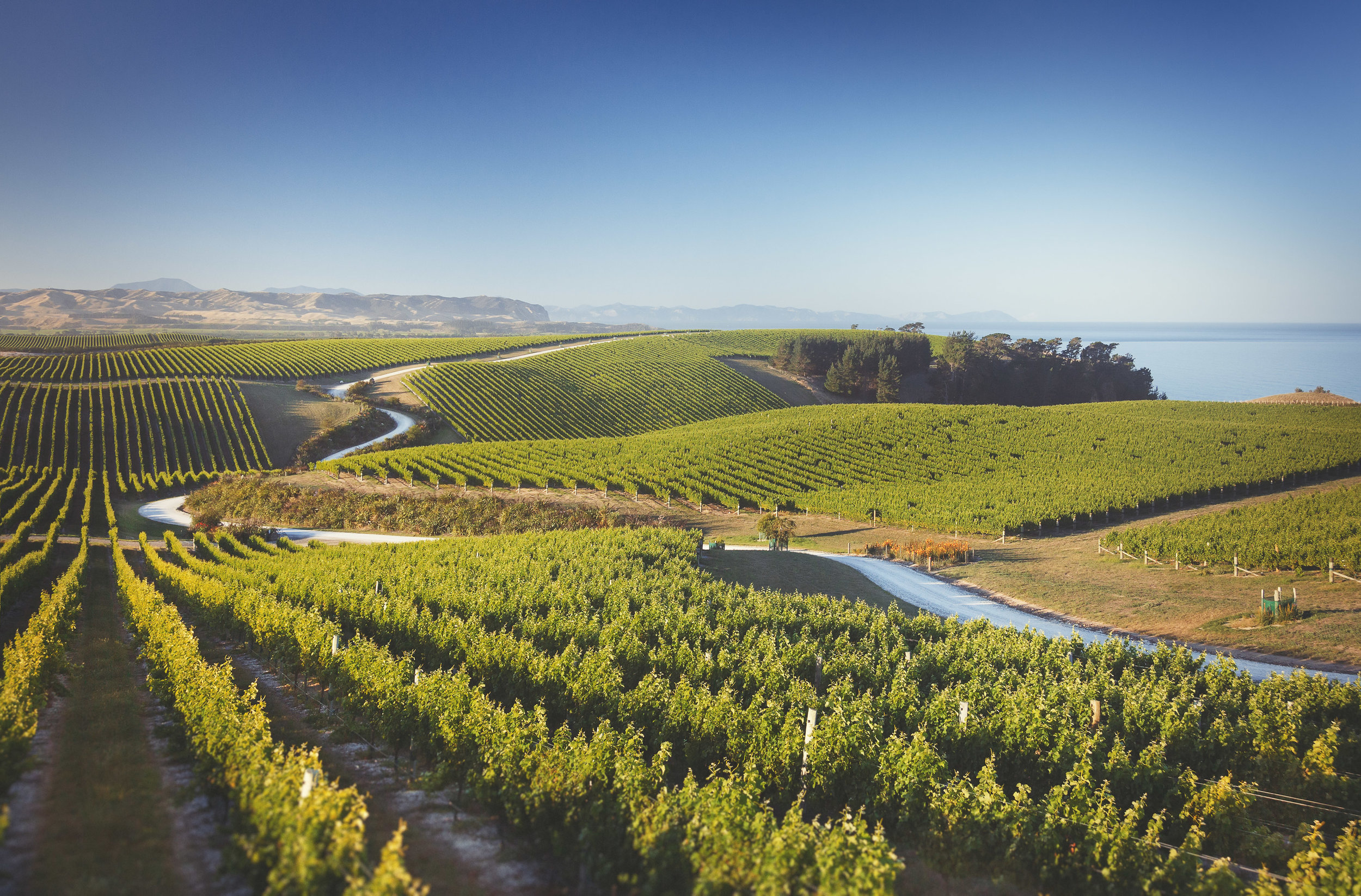 Yealands wine estate - Sea view vineyard (Image : Yealands)