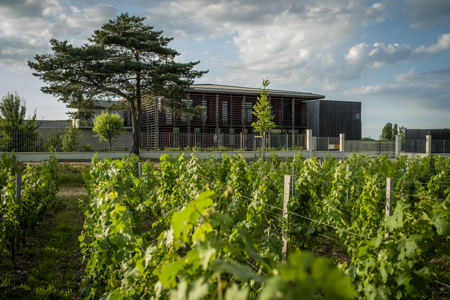 Chateau Couhins vineyards -part of the French National Institute of Agricultural Research (Image: Chateau source)
