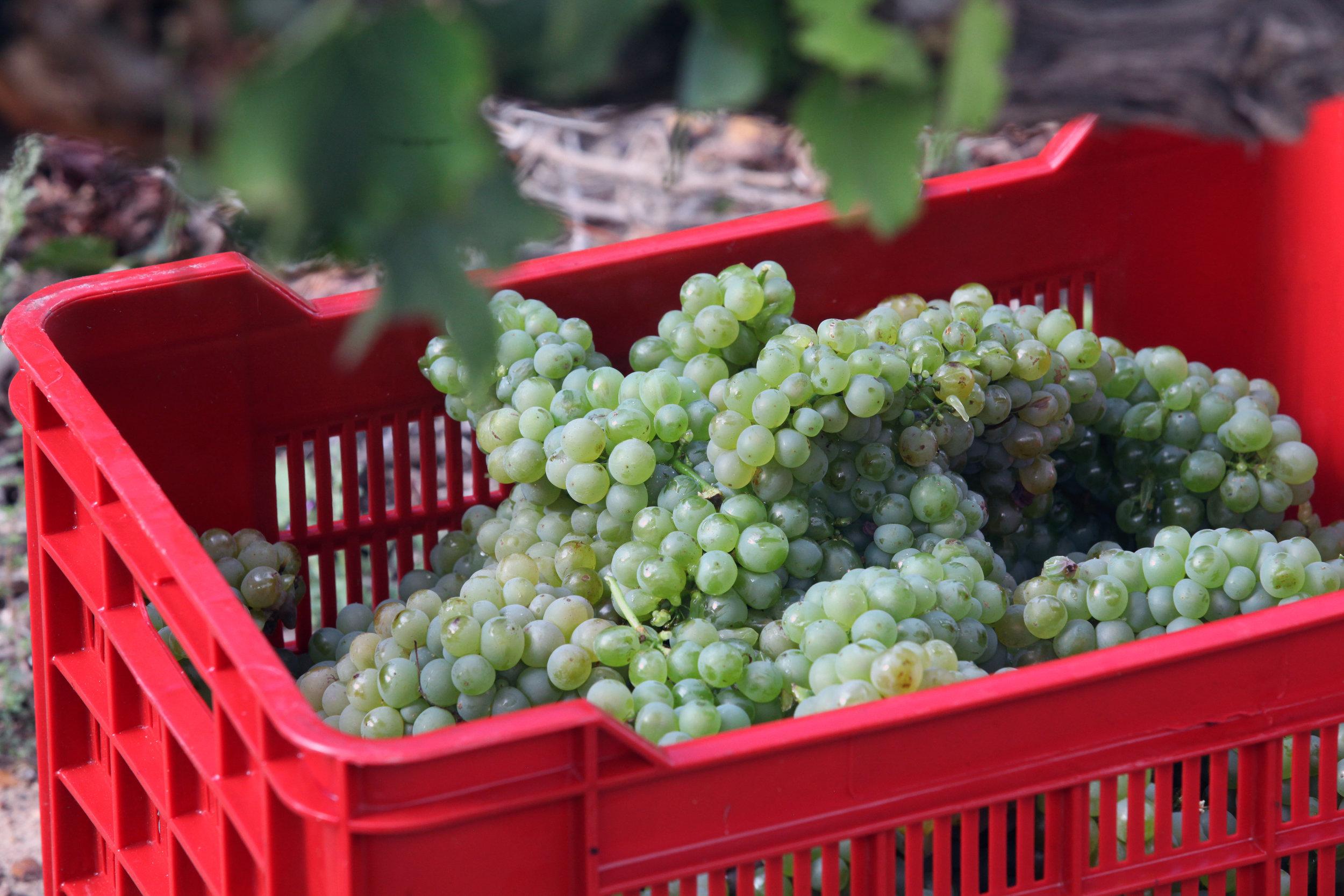Harvest05.jpg