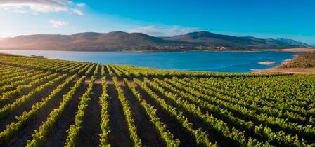 Vineyards Aerial Pano.jpg