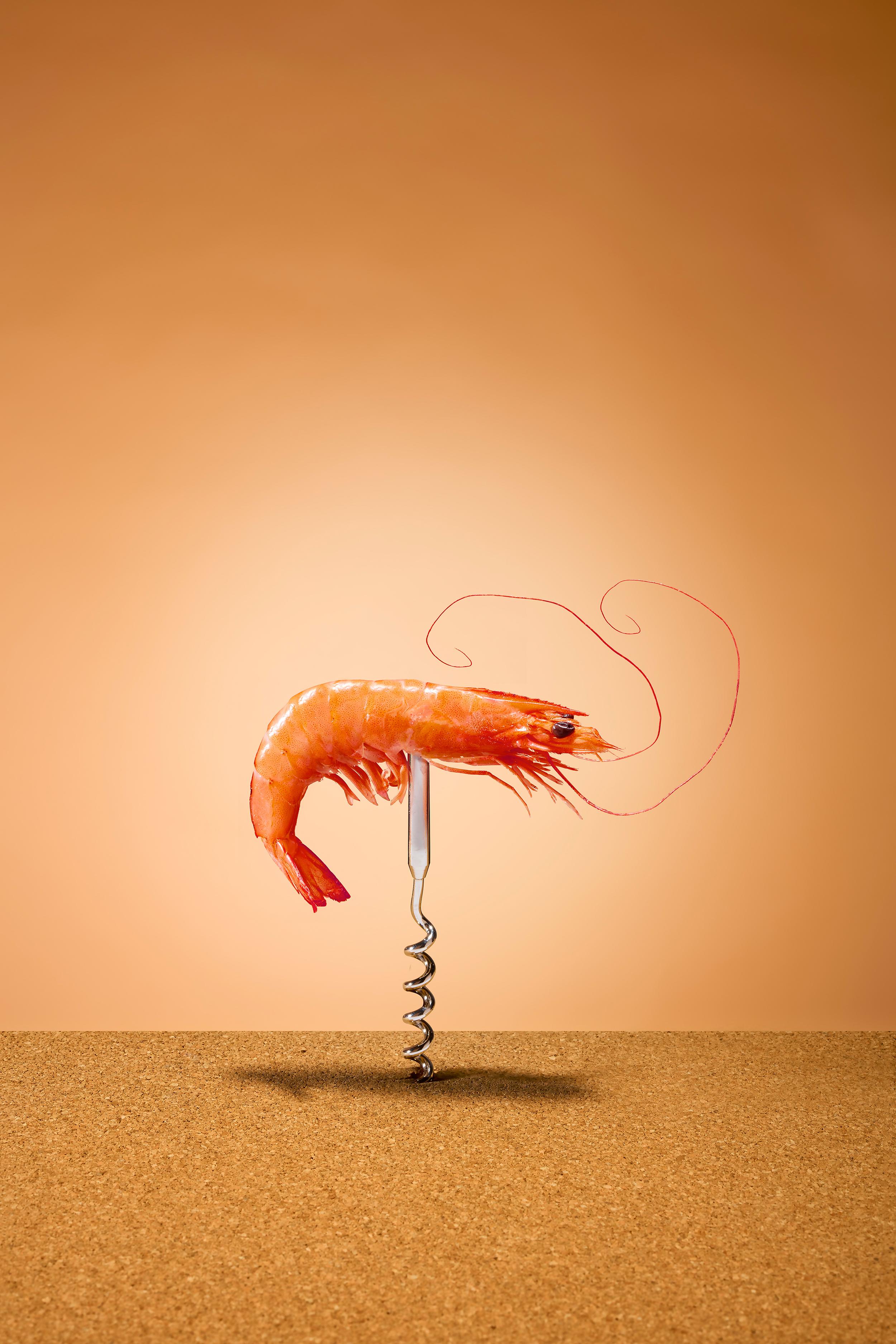 Recruitment_shrimp_internet_srgb .jpg