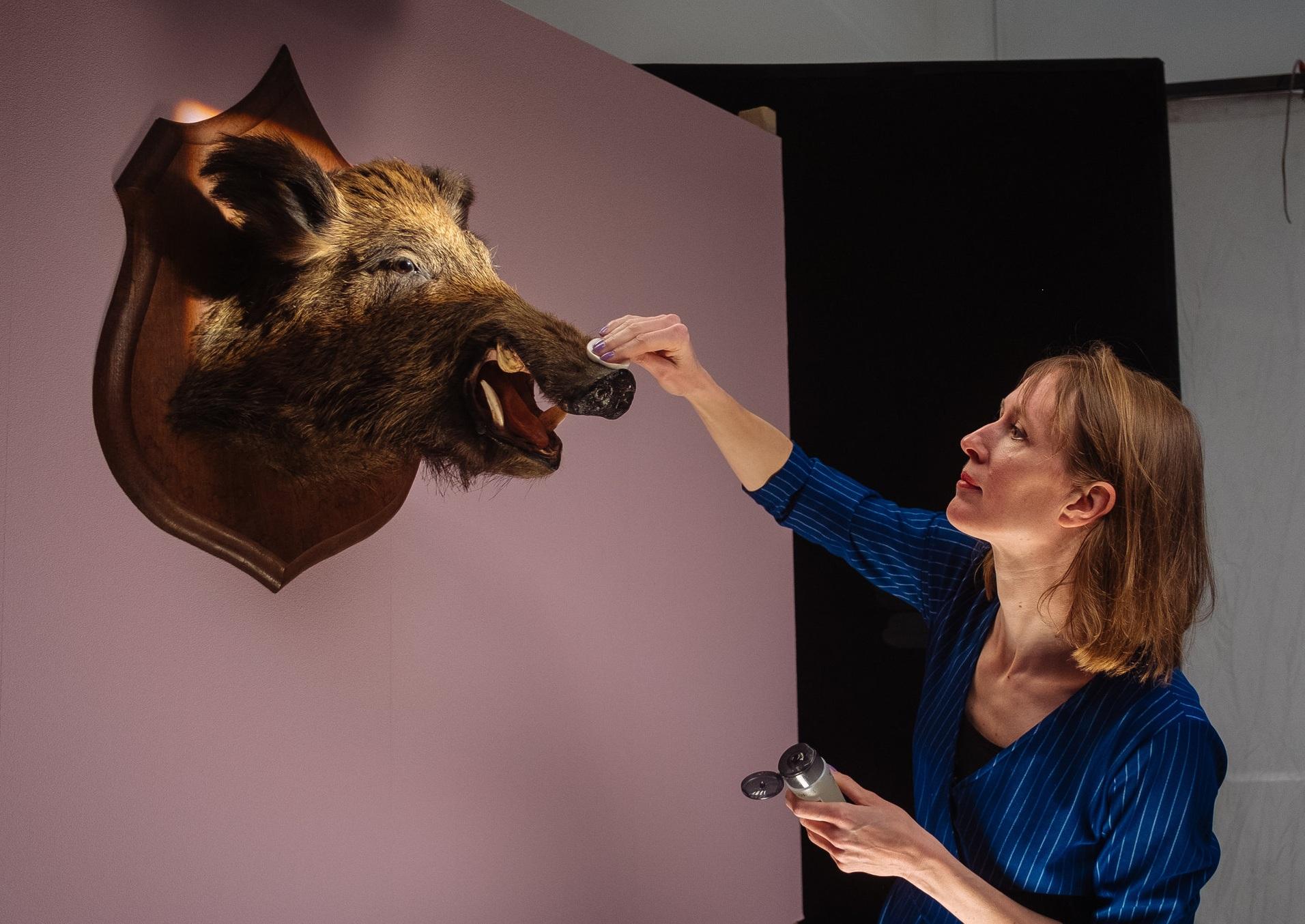 making of swine