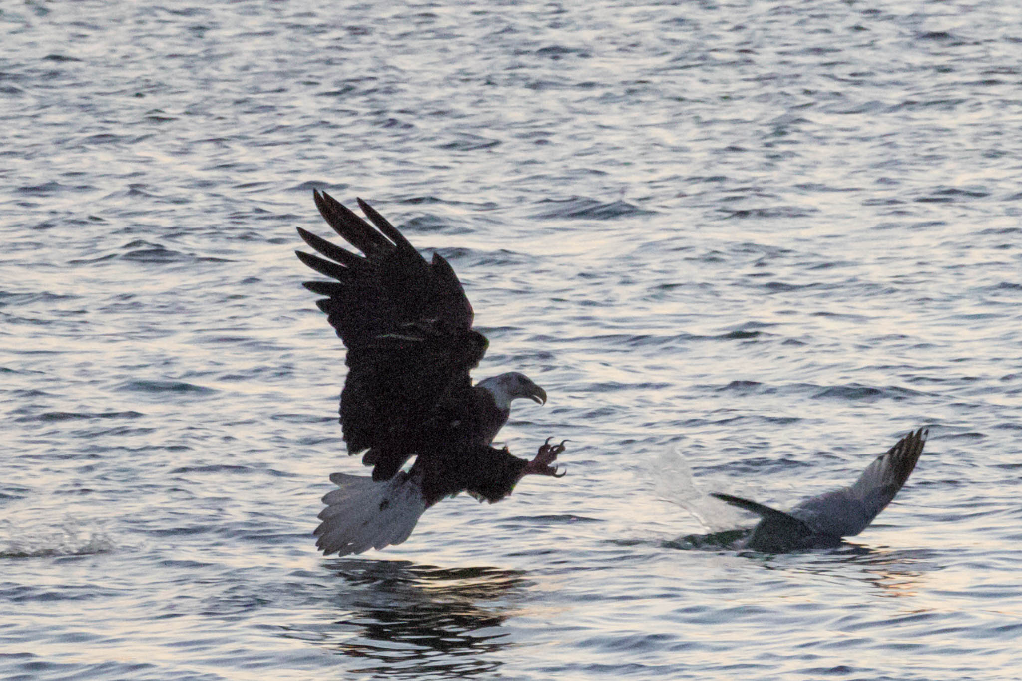 Eagle - Tidal Basin-3.jpg