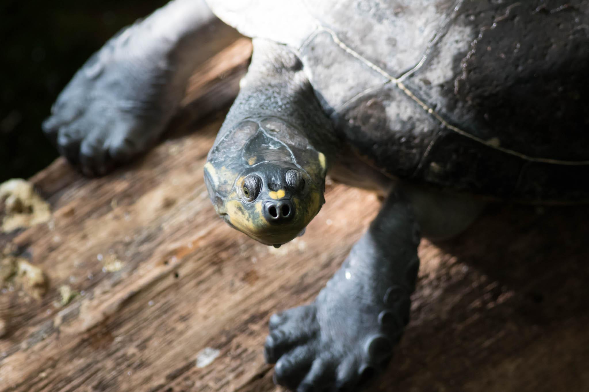 Freshwater Turtles-4.jpg