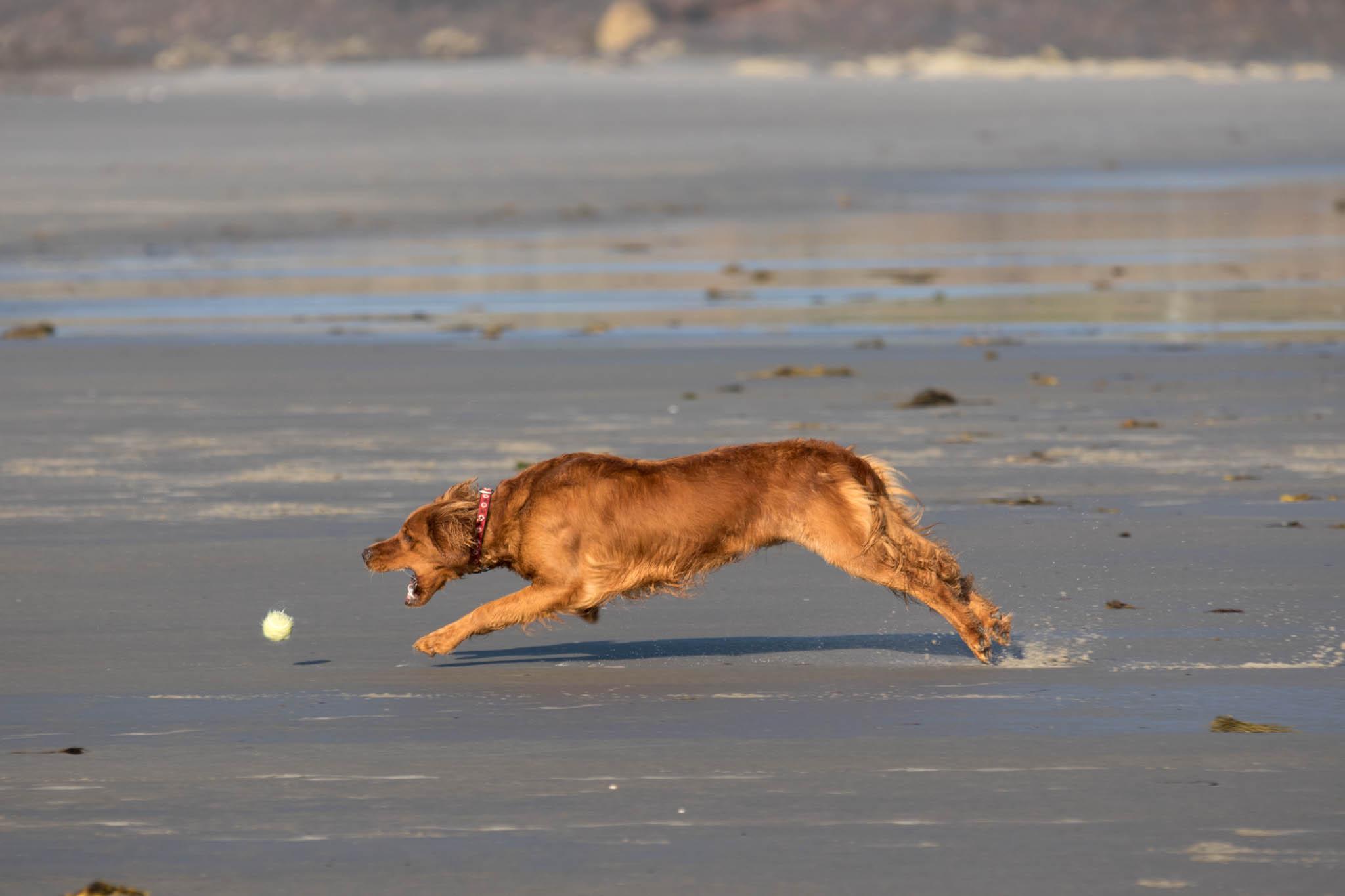 Higgins Beach - Red Dog-2.jpg