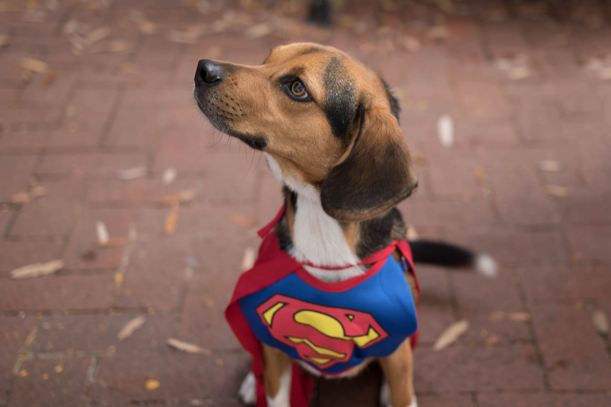 Shirlington Dog Treat or Treat-1-Edit.jpg