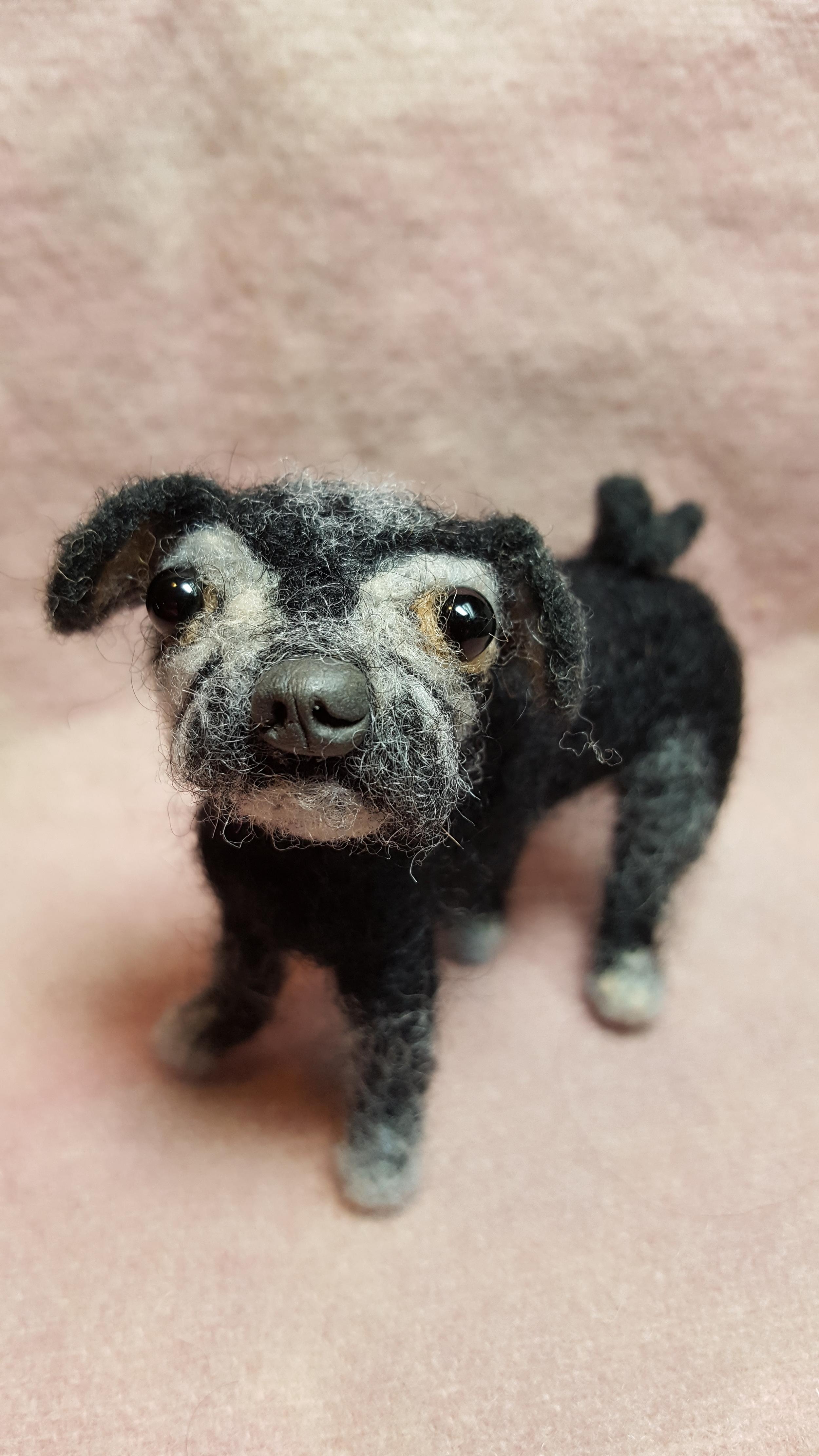 Mimi Louise, an elderly pug