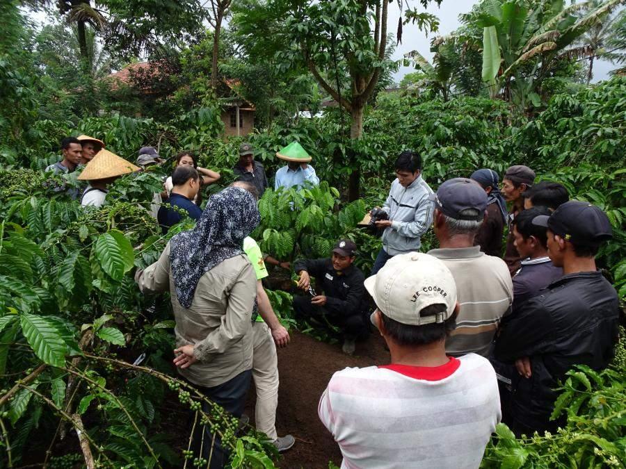 Photo: Rainforest Alliance