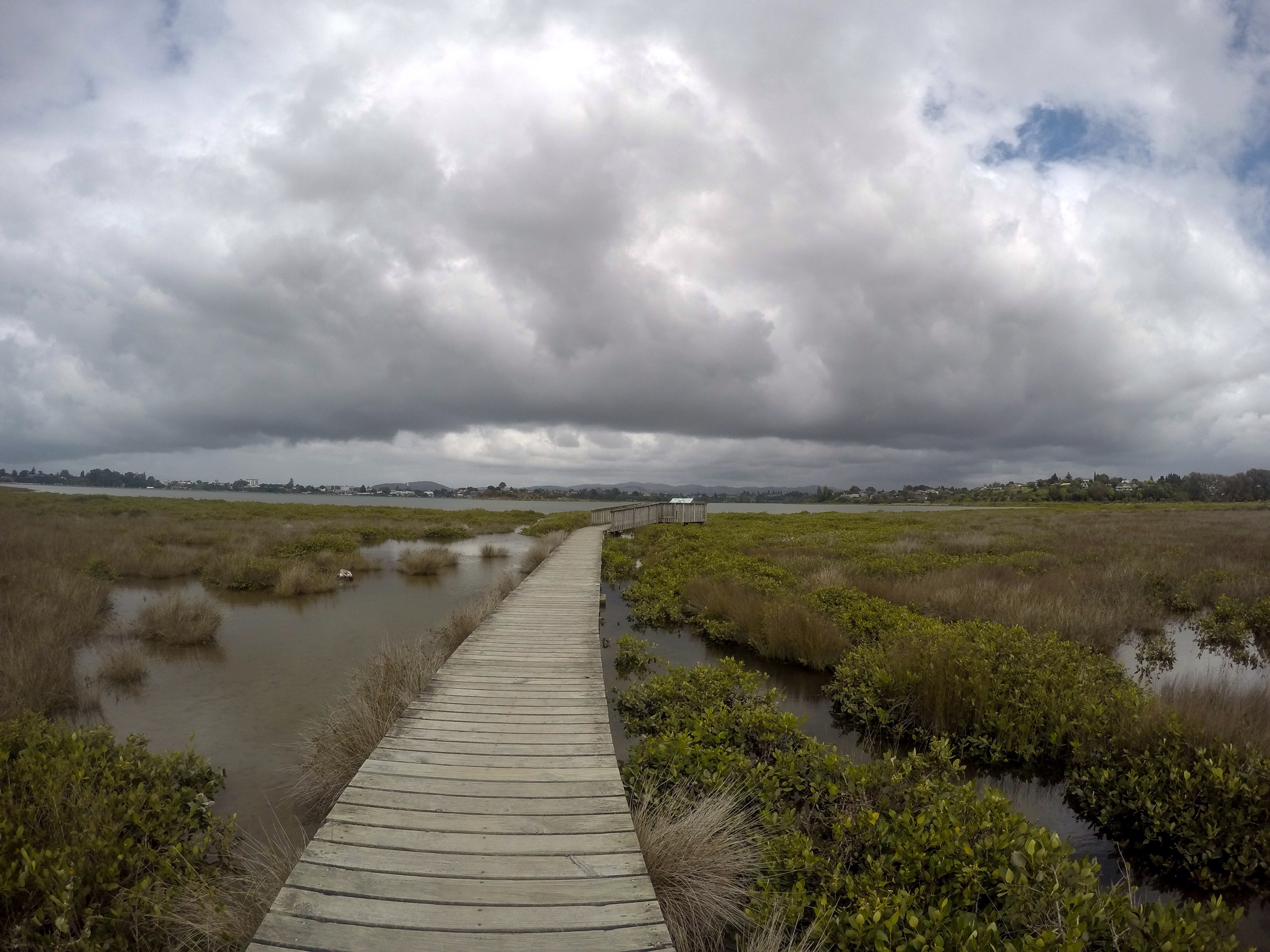Wetland buffer zone. Tauranga, New Zealand.