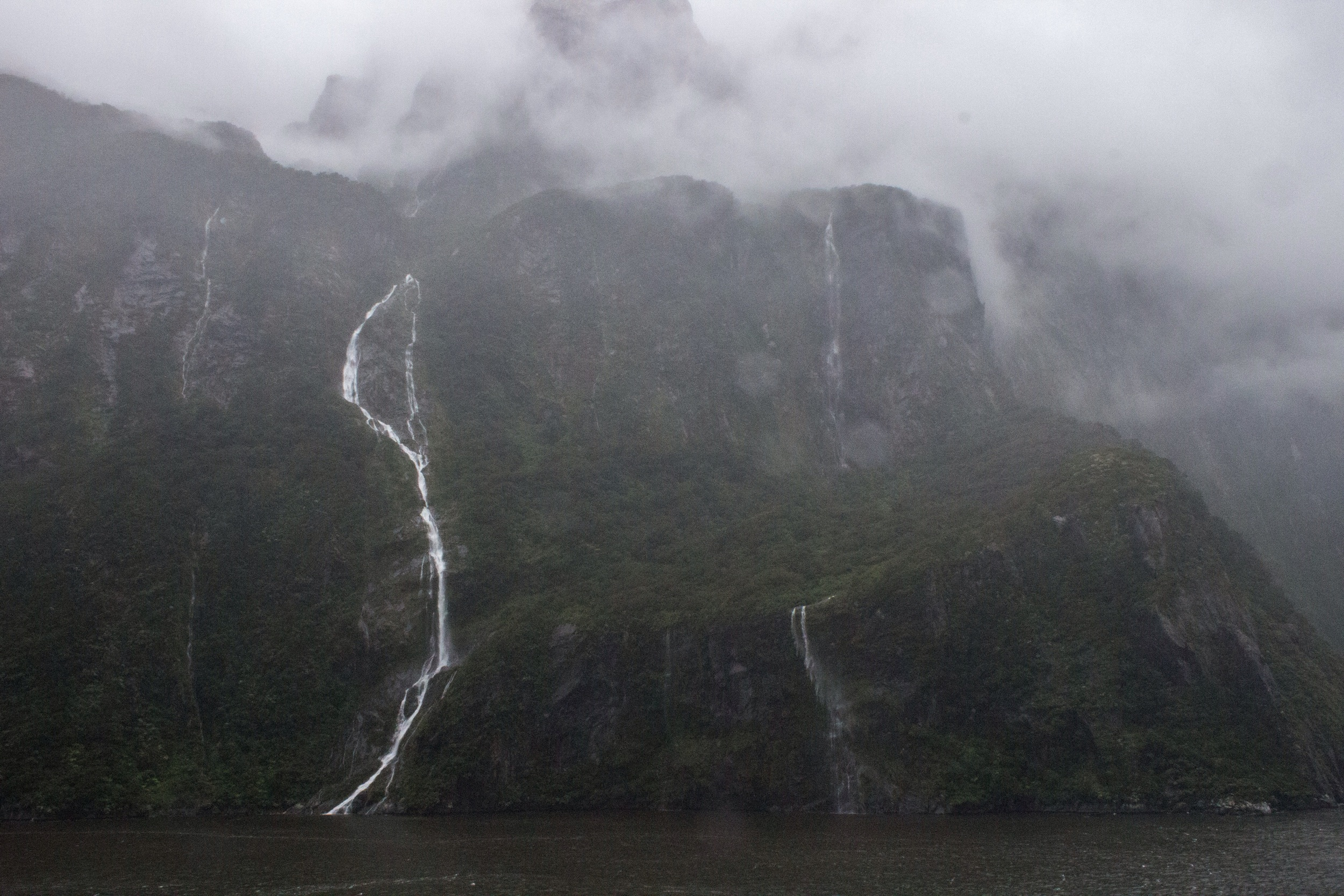 Rain and the rainforest. Milford Sound, New Zealand.
