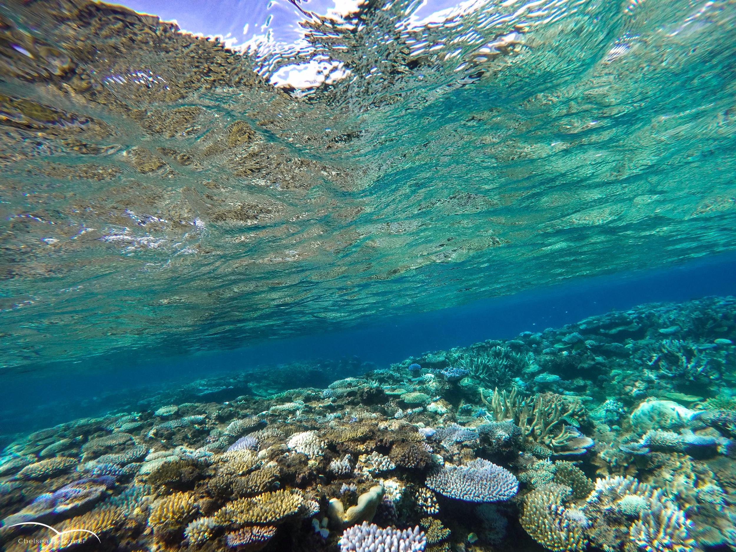 Coral castles. Lifou, New Caledonia.