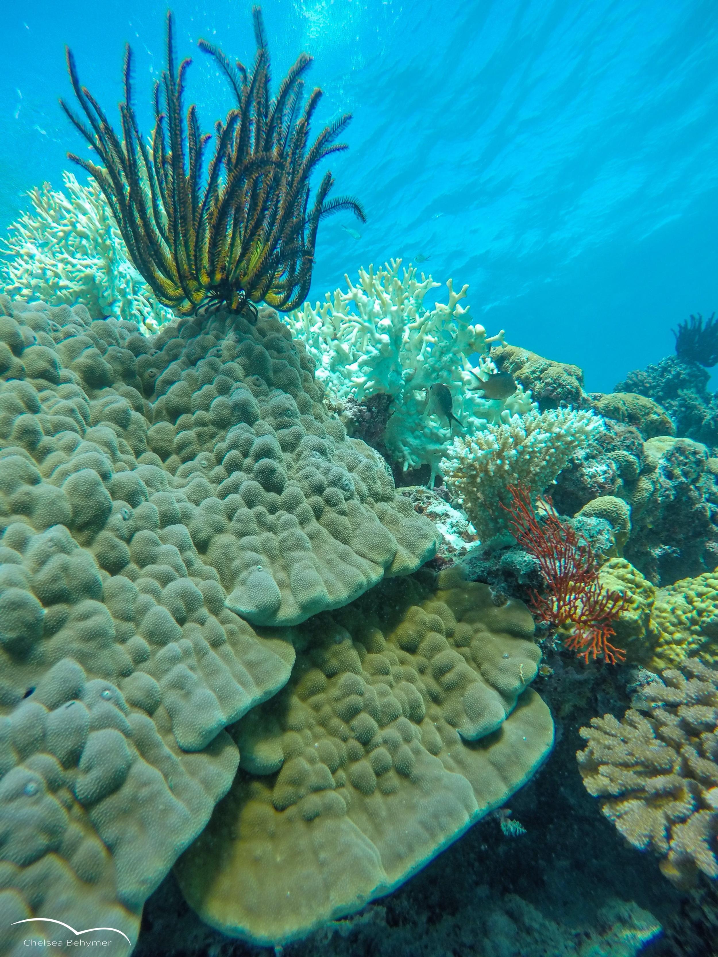 Low-profile coral colony. Lifou, New Caledonia.