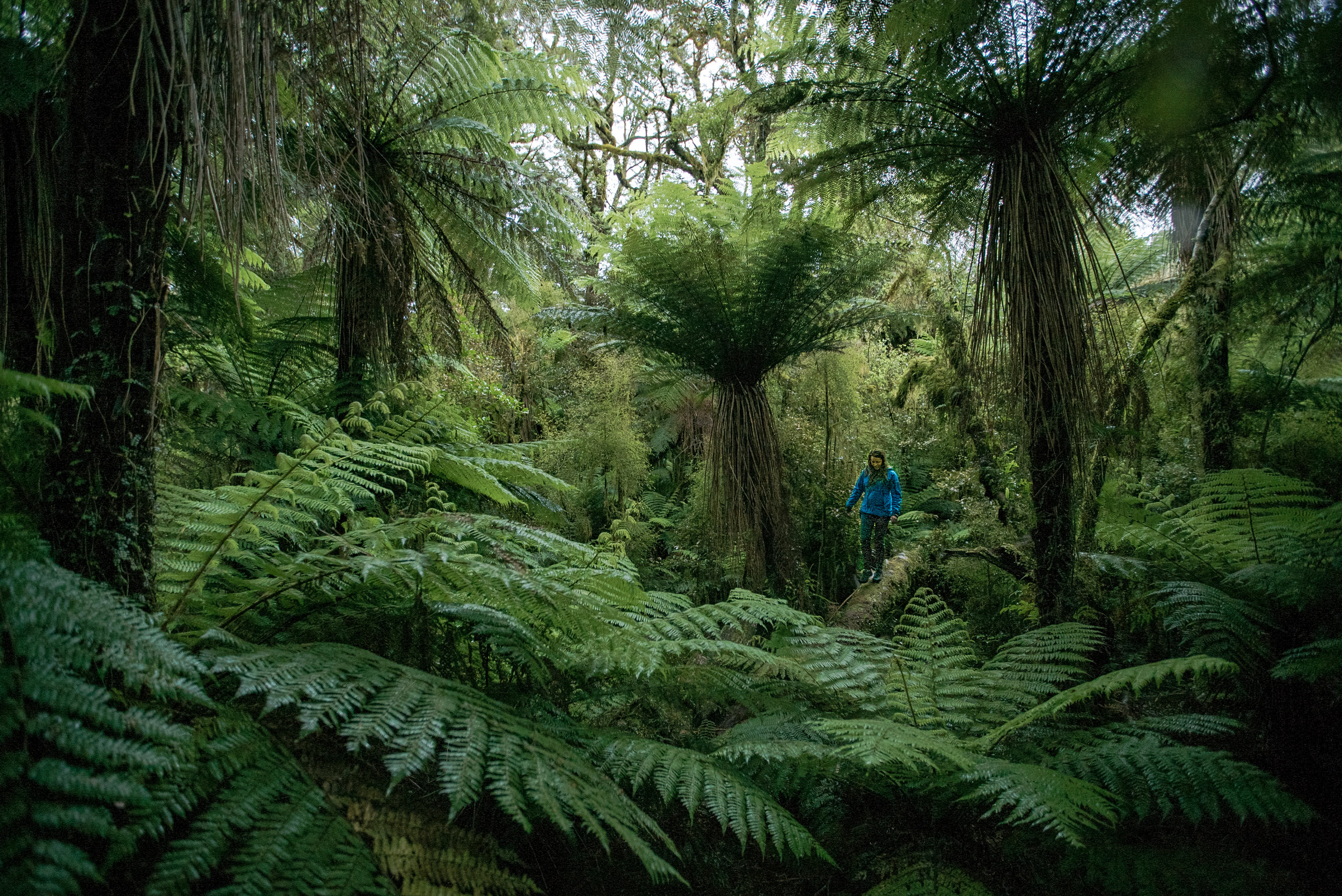 Lost in the land before time. Westland, New Zealand. Photo: Chris Korbulic