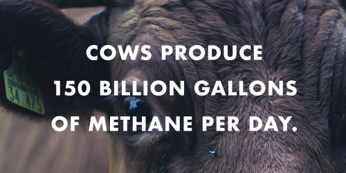Via http://www.cowspiracy.com/facts/