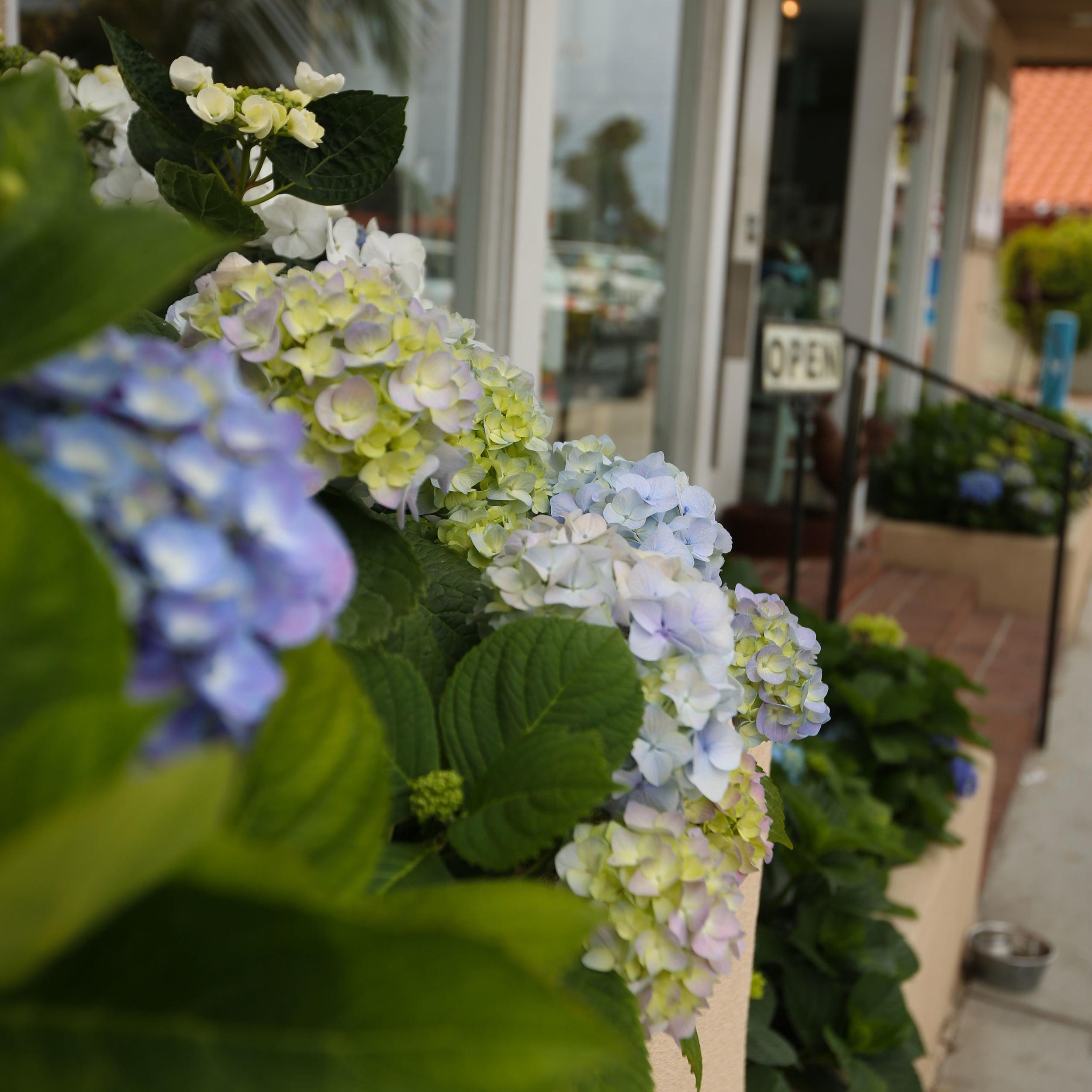 BloomingStorefront.jpg