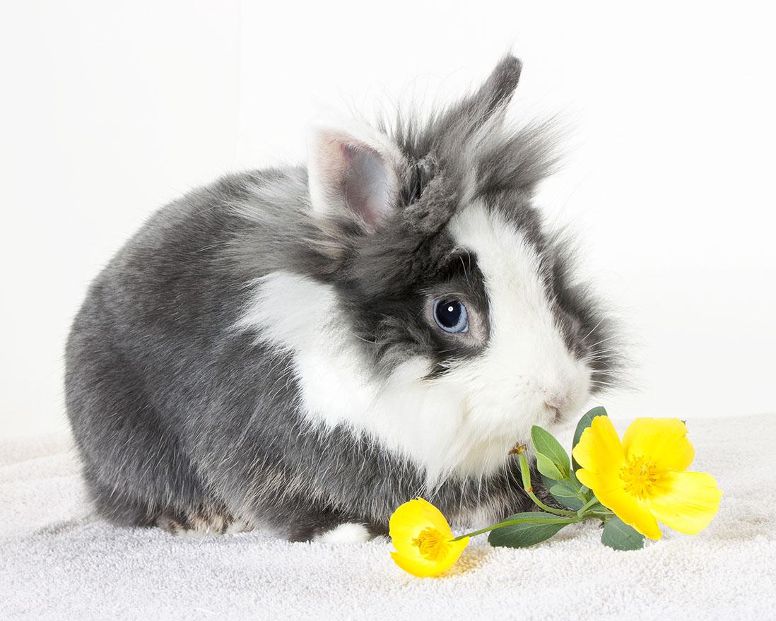 Bugs Bunny 97250.jpg
