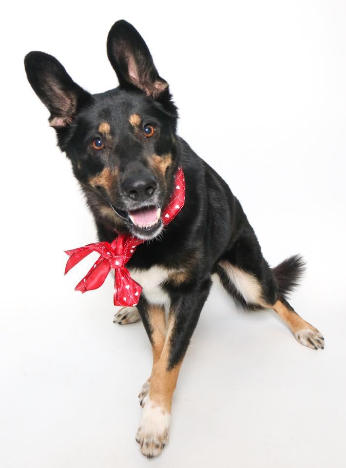 Photo of Hansel by Austin Humane Society