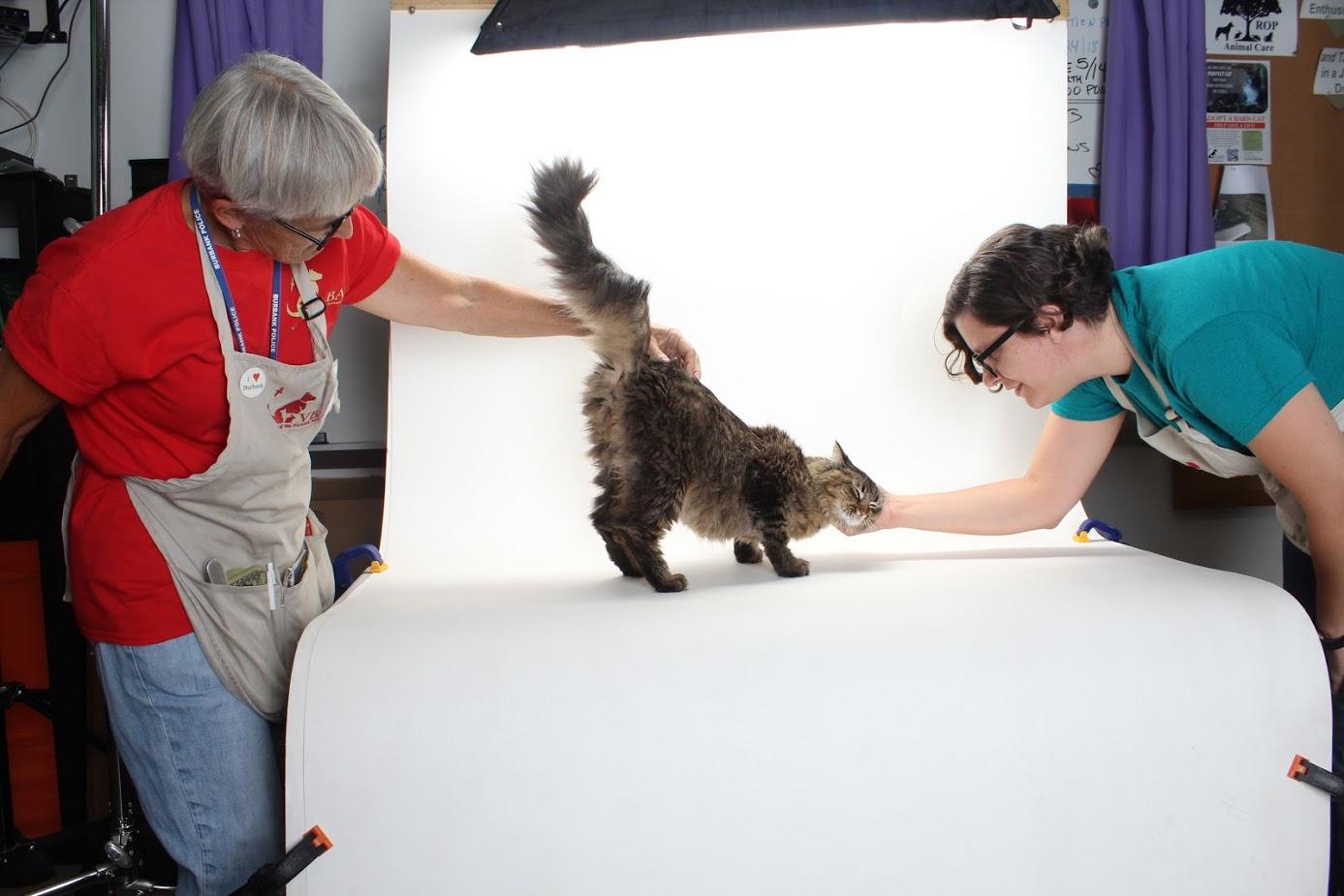 Volunteers of the Burbank Animal Shelter.