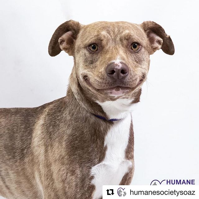 #Repost @humanesocietysoaz ・・・ That face you make when you realize it's the weekend! 😊
