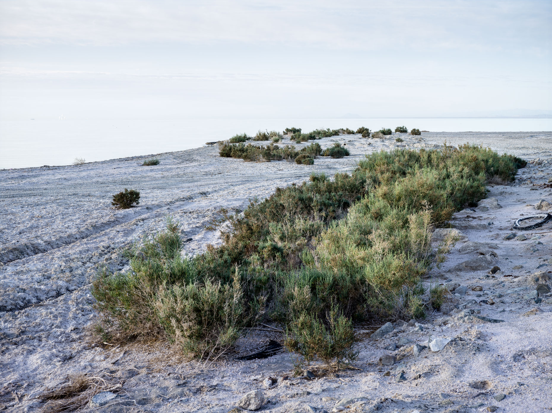 Salton Sea brush along the shore of Bombay Beach