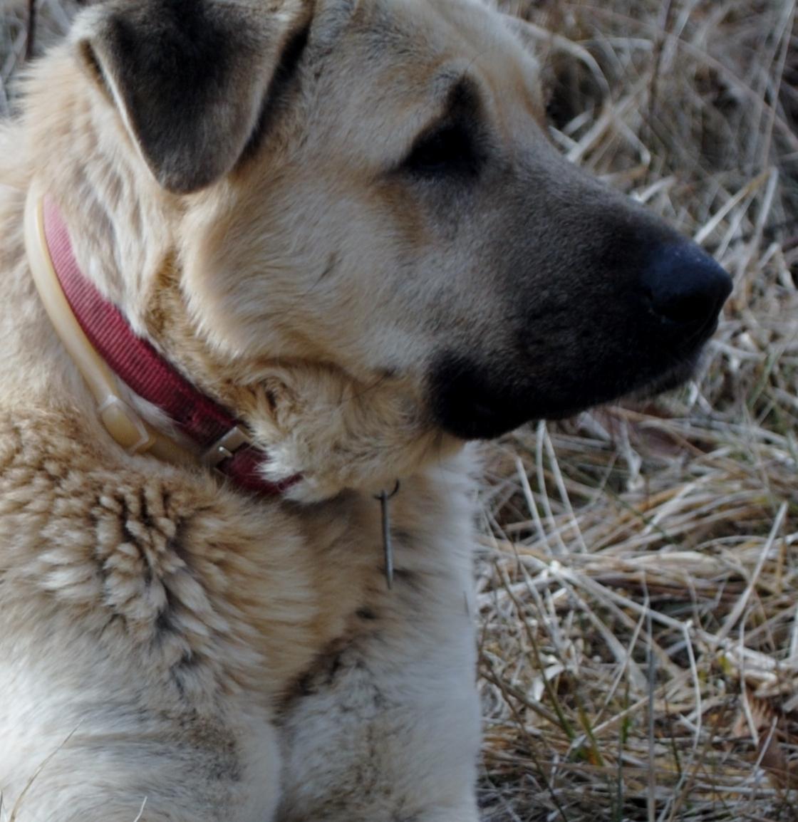 Dogs_Turk.JPG