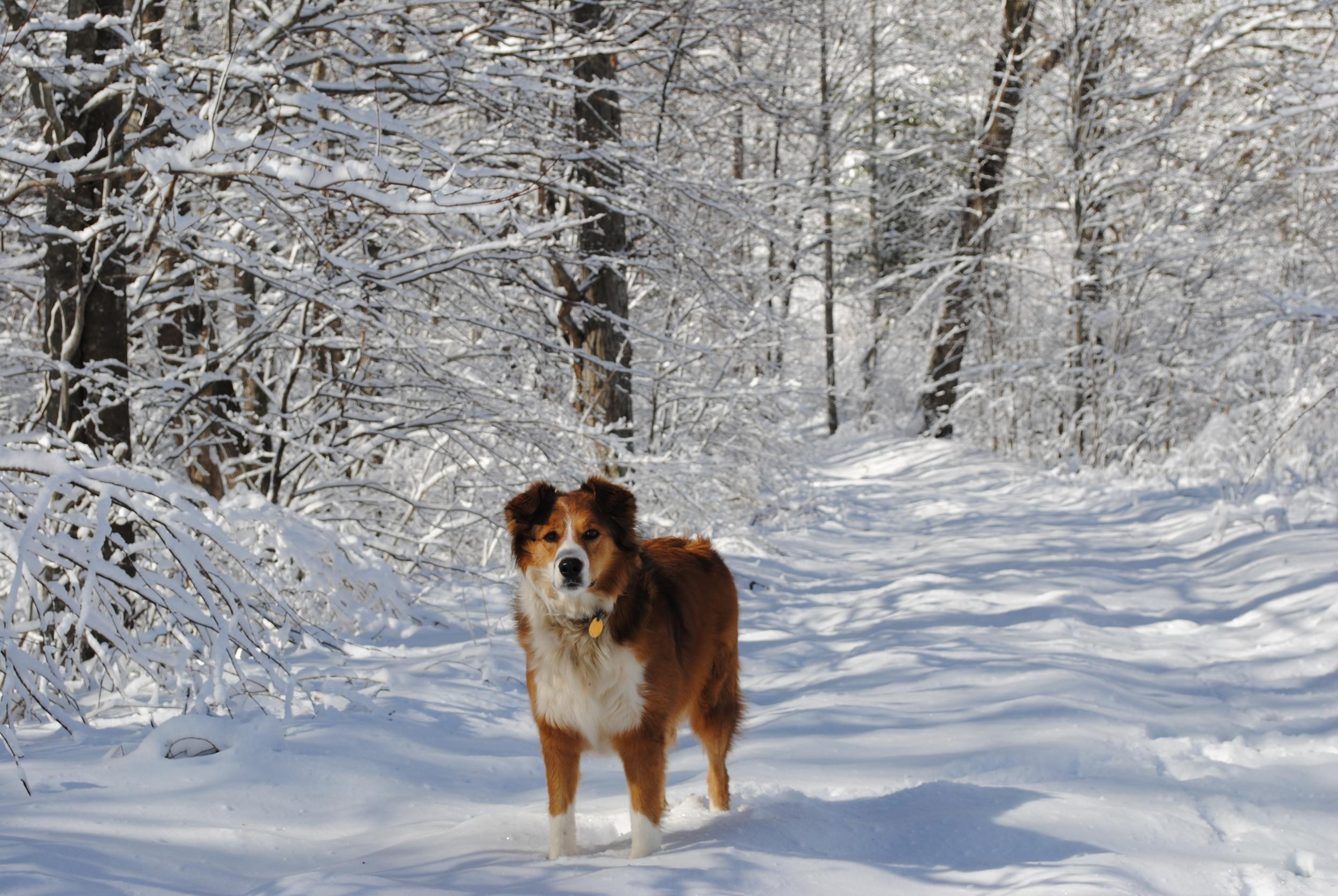 Dogs_Heidi2.JPG