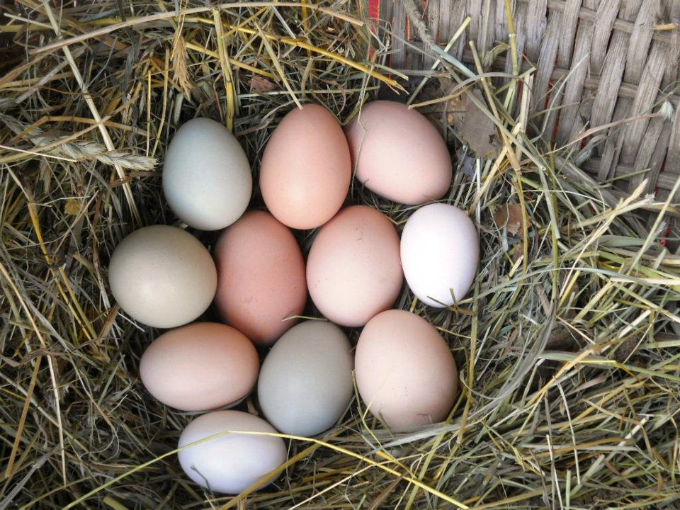 Willet Ponds Farm     Gather eggs, feed the animals, and get a feel for farm life     Learn more