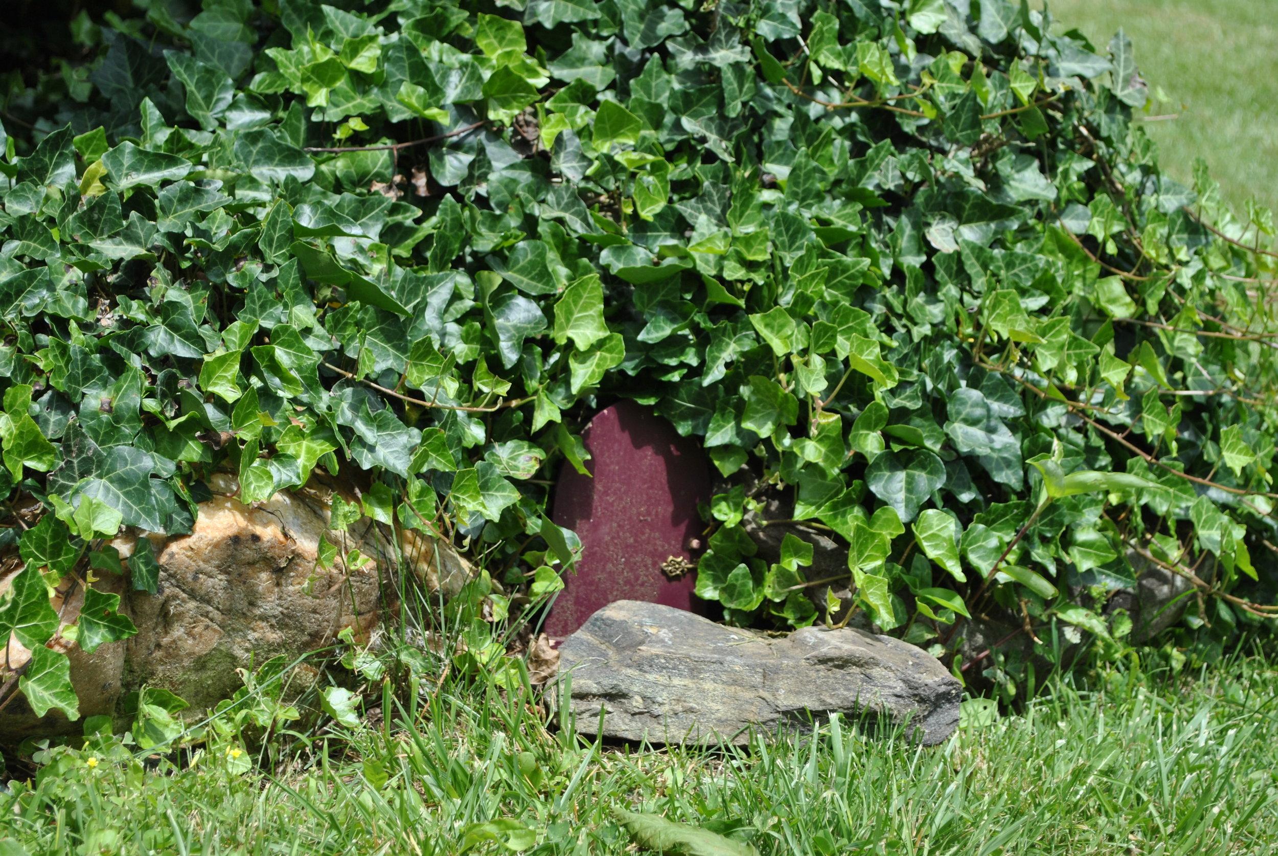 English Ivy Fairy Garden