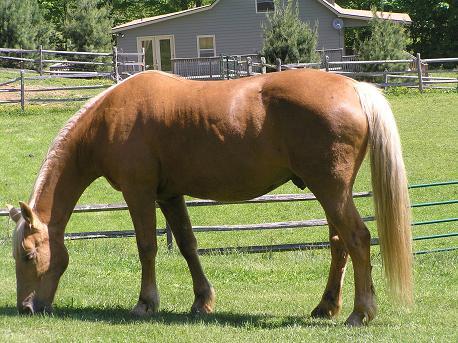Horses_Pal.JPG