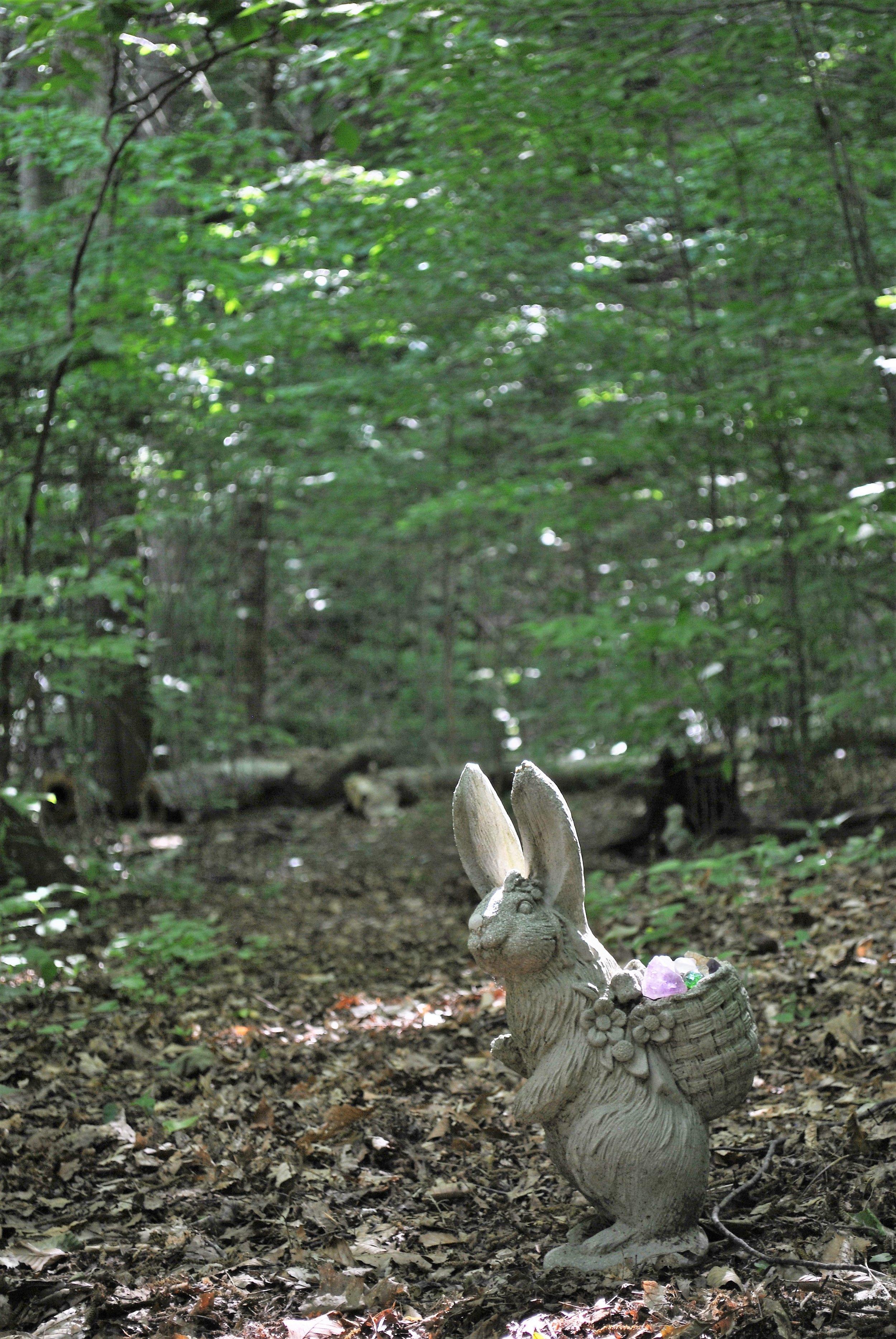 Fairy bunny.JPG